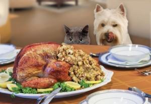 Thanksgiving Larger