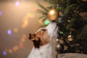 Common Holiday Hazards for Dogs and Cats