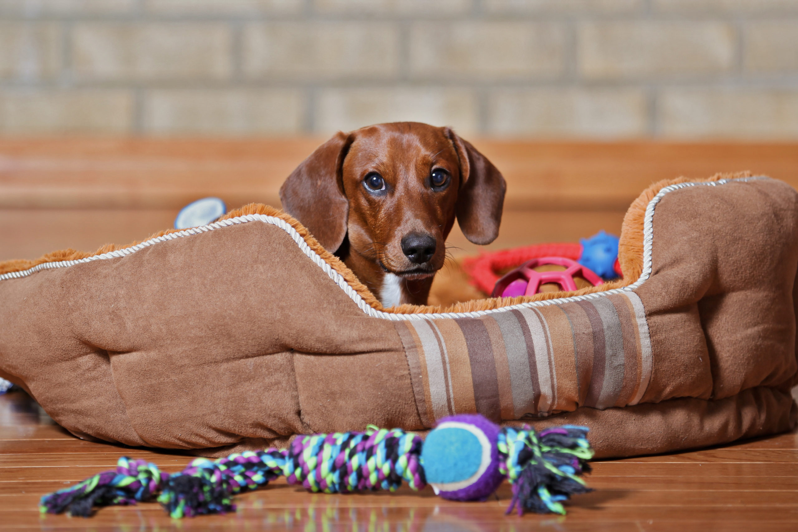 Chew This, Not That: Pet-Safe Chew Toys