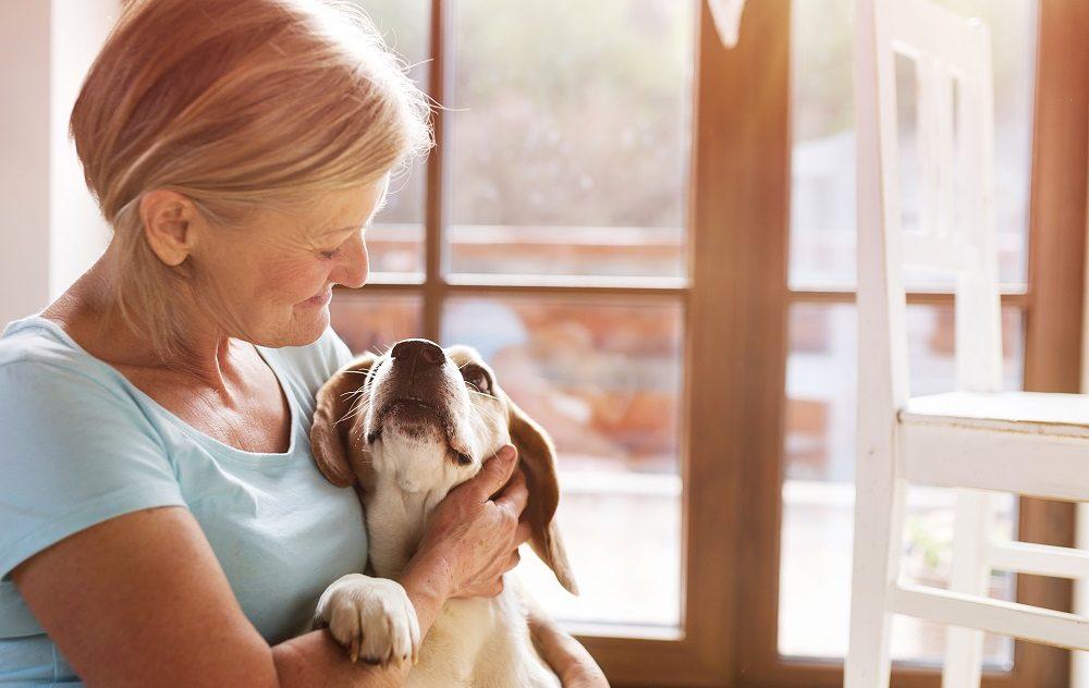 Aspiration Pneumonia in Pets