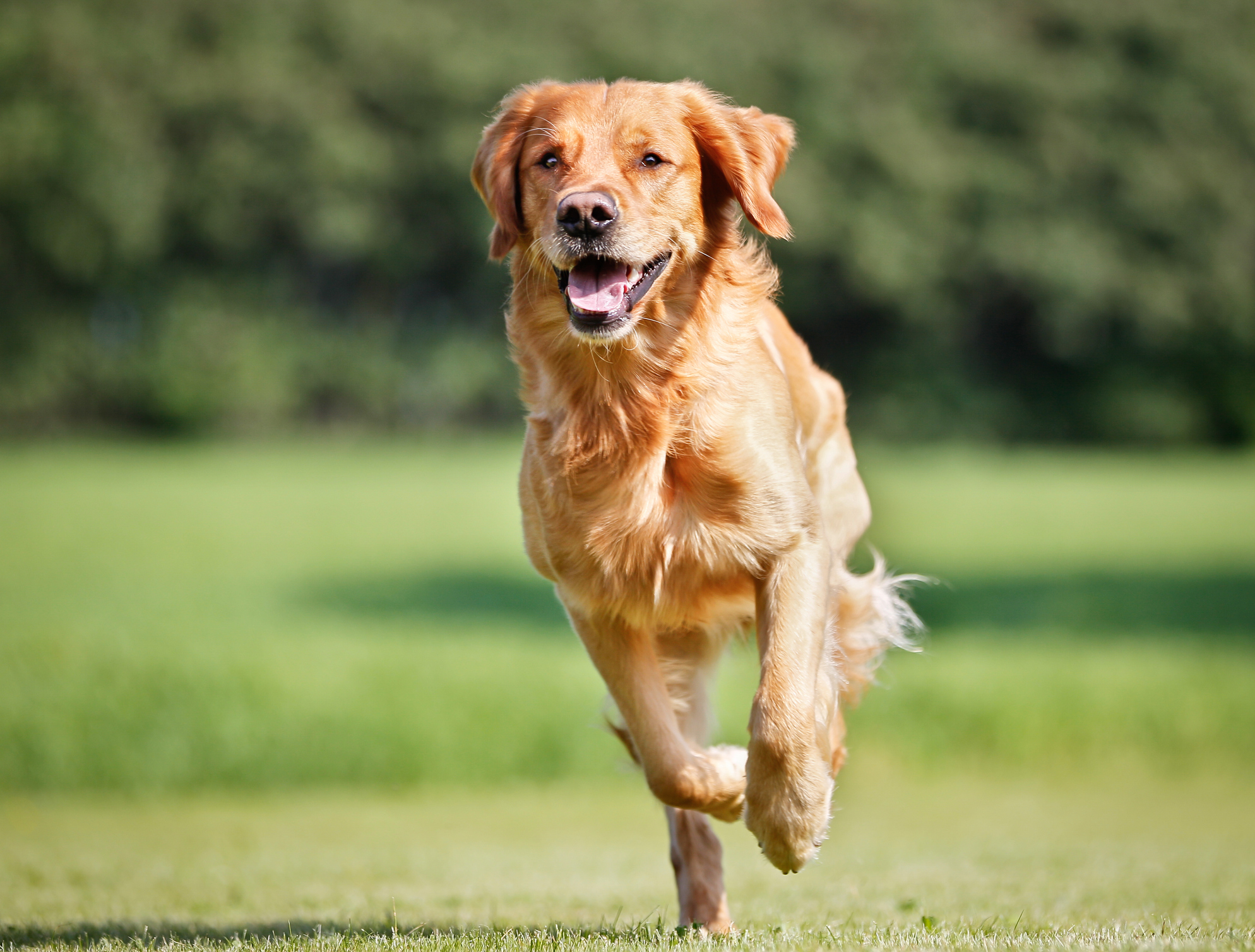 4 Important Practices That Can Prevent Orthopedic Problems in Your Dog